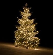 Christmas Tree Resized 3